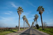 Free Row Of Palm Trees Along Side A Road Royalty Free Stock Image - 18077946