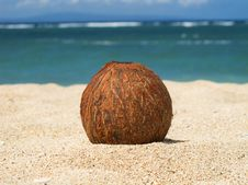 Free Coconut On The Sand Stock Images - 18078324