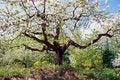 Free White Tree Royalty Free Stock Photography - 18089647