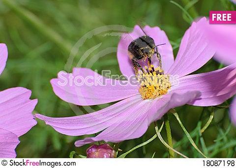 Free Gathering Bee Royalty Free Stock Photos - 18087198