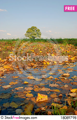 Free Colorful Leaves Royalty Free Stock Photos - 18089798