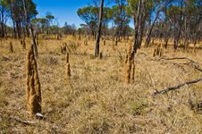 Termite Mounds Royalty Free Stock Photo