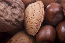 Free Mix Nuts Royalty Free Stock Photo - 18082615