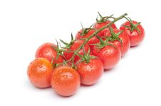 Cherry Tomatoes On The Branch With Water Drops Stock Images