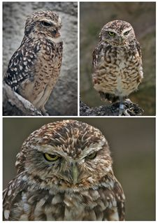 Free Owl Stock Photos - 18084963