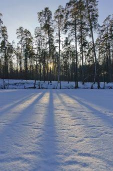Free Winter Evening Royalty Free Stock Photo - 18084965