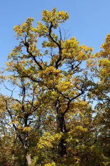 Free Autumn Tree Stock Photos - 18086033