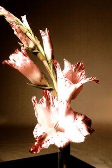 Free Flower In Vase Stock Image - 18086381