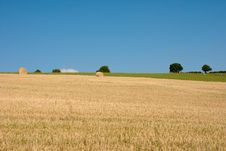 Free Harvested Wheatfield Stock Image - 18086411