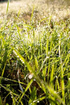 Free Grass Royalty Free Stock Image - 18086846