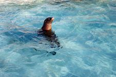 Sea Lion, The Sea Lion Sleeps Royalty Free Stock Photo