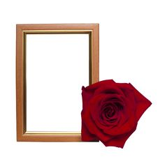 Free Frame With A Rose Royalty Free Stock Image - 18086966
