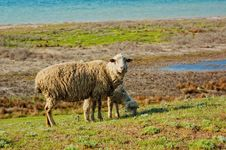 Free Ship And Lamb Pasturing Stock Images - 18087154