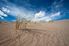 Free Sand And Desert Plants Royalty Free Stock Images - 18087419