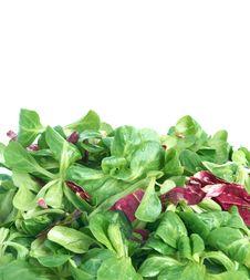 Free Corn Salad And Radicchio Stock Photo - 18090240