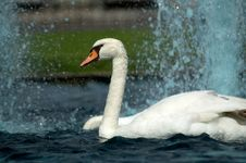 Free Swans In Fountains Stock Images - 18090364