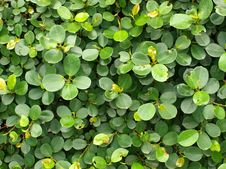 Free Circular Leaves Stock Photography - 18091242
