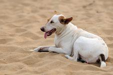 Free Dog Royalty Free Stock Photography - 18091507