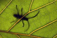 Free Insect On A Leaf Stock Images - 18095654