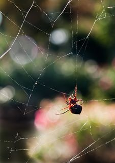 Free Spider Stock Photography - 18095882