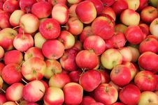 Free Juicy Apples Stock Photos - 18096593