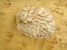 Free Abalone - Genus Haliotis Stock Photos - 18097083