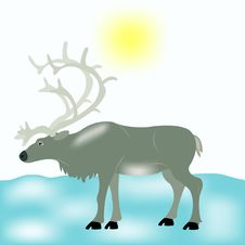 Free Reindeer In Tundra Royalty Free Stock Photos - 18097538