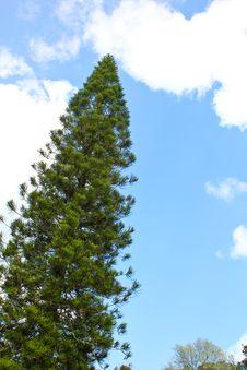 Free Tree And Sky Stock Image - 18097611
