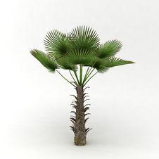 Free Wild Bich Palm Royalty Free Stock Image - 18098546