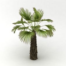 Free Palm Stock Photos - 18098933