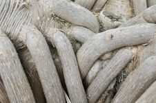 Free Ancient Tree Roots Stock Photos - 18099093