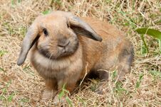 Free Rabbit Stock Photo - 18099530