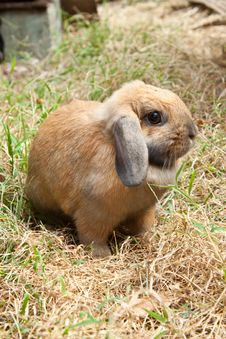 Free Rabbit On Grass Royalty Free Stock Images - 18099579