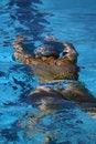 Free Woman Swimming Underwater Royalty Free Stock Photo - 1819405