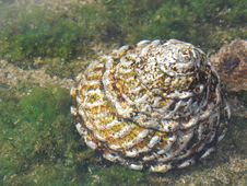 Free Sea Slug Stock Photos - 1810023