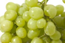 Free Grapes Stock Photography - 1810082