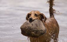 Free Water Play Dog Stock Photos - 1818573