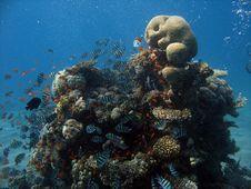 Free Coral Scene Stock Image - 1819051
