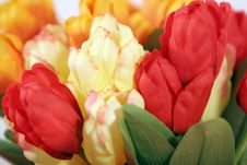 Free Beautiful Colorful Tulips - Close Up Royalty Free Stock Images - 1819119