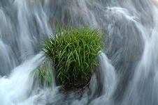 Free Grass In Waterfall Stock Images - 1819944