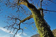 Free Tree Stock Image - 1819971