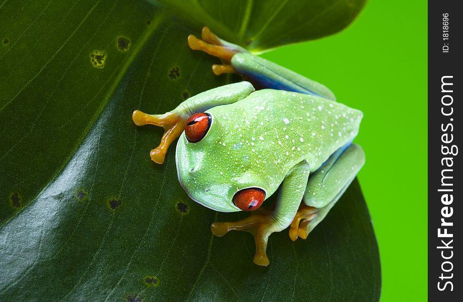 Frog on the leaf