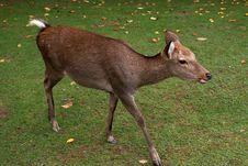 Free Deer Royalty Free Stock Image - 18104336