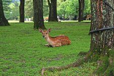 Free Deer Stock Photo - 18104850