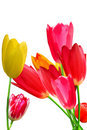 Free Flowers  Tulips   Flowering   Bouquet Royalty Free Stock Images - 18118219