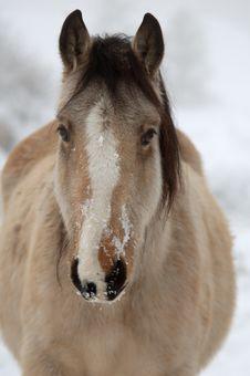 Free Wintery Horse Royalty Free Stock Photos - 18110408