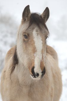 Free Wintery Horse Stock Images - 18110414