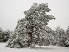Free Winter. Stock Photography - 18110962