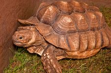 Large Tortoise Stock Photos