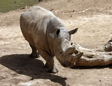 Free Rhino Stock Image - 18111391